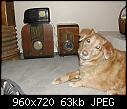 -radio_bigdog.jpg