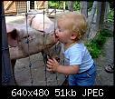 -swine-flu-vector.jpg